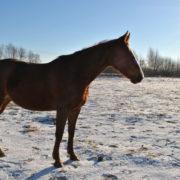 pastwisko zimowe